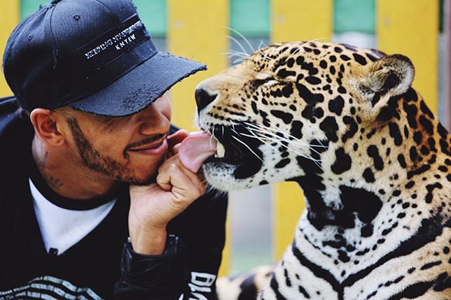 Льюис Хэмилтон общается с хищным зверем в мексиканском фонде Black Jaguar - White Tiger