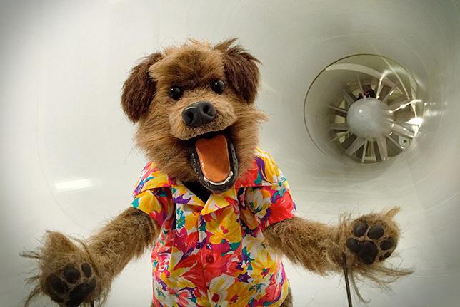 Собачка Хакер, персонаж учебной программы BBC Terrific Scientific в аэродинамической трубе McLaren