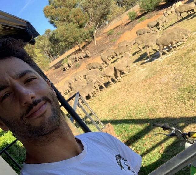 Даниэль Риккардо и австралийские овцы